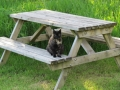 Picnic table near the river, with Molly Cat
